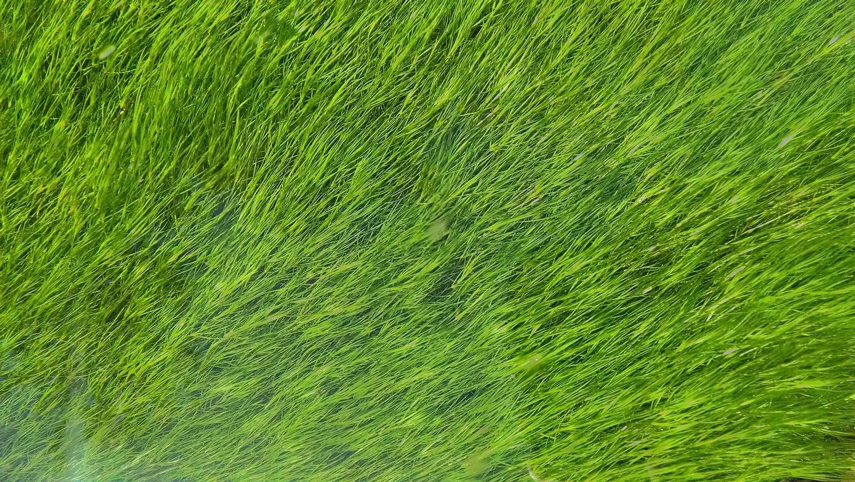 Flowing algae